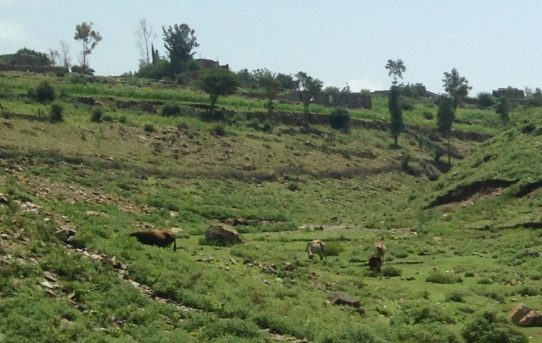 صور رائعة جداً لقرية الريامي