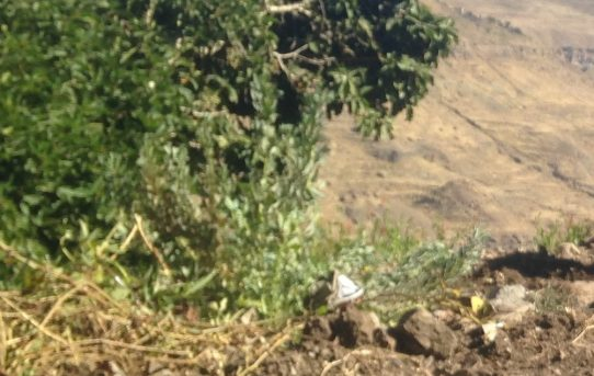 صور رائعة للمزارعين في قرية الريامي - التويتي